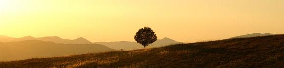 Die Sonne geht gelblich hinter einem Weidenbaum unter