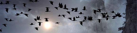 Vogelschwarm am düsteren Himmel