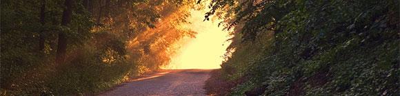 Ein Waldweg mit einem Licht am Ende